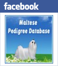 maltese pedigree database on facebook