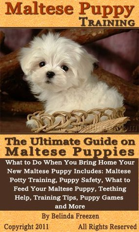 maltese puppy training freezen