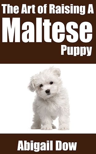 the art of raising a maltese puppy dow