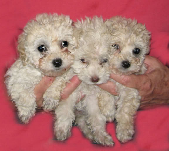 puppy mill puppies